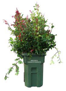Green Waste Vase